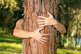 A photo of a tree in the forest with a pair of human arms reaching around to hug the tree.